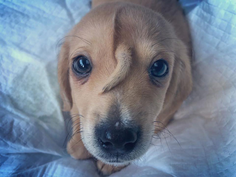 pup with tail growing out its head 3 Vet Says Pup with Tail Growing Out Its Head is Perfectly Healthy and Super Adorable