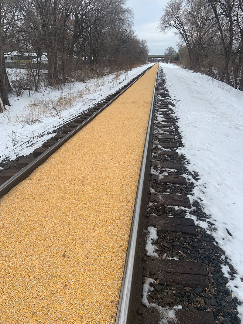 corn train railroad spill 2 A Train Carrying Corn Spilled All Over the Track and Made a Golden Road