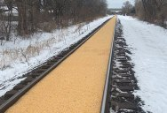 A Train Carrying Corn Spilled All Over the Track and Made a Golden Road