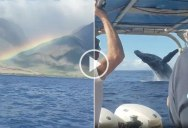 When You're Filming a Rainbow and a Whale Breaches Right Behind You