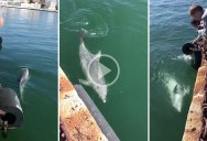 Dolphins Seen Swimming Near Cities with Ferries and Cruise Ships Halted
