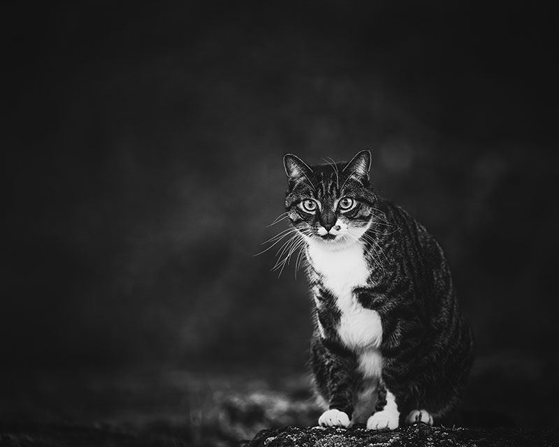professional cat photoshoot reddit 11 Guy That Paid for Professional Photoshoot of His Cat Has Zero Regrets