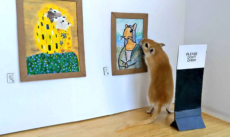 couple makes miniature art museum for their gerbils 2 This Couple Made a Miniature Art Museum for their Gerbils and its the Best