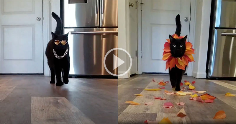 Fashion Kitty Has the Fiercest Catwalks EVER