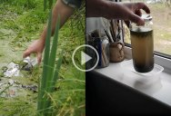 Amazing Stuff Happens When You Seal a Jar of Pond Water and Leave It by the Window