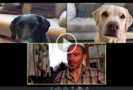 That BBC Sports Broadcaster is Back For a Zoom Call With His Dogs