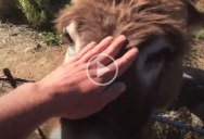 This Donkey Reuniting With Its Owner After Quarantine Is So Heartwarming