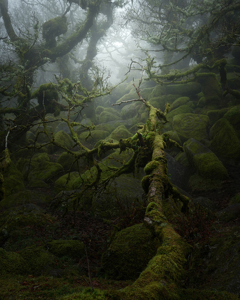 neil burnell wistmans wood photography 1 Nobody Captures the Mystical Wistmans Wood Like Neil Burnell
