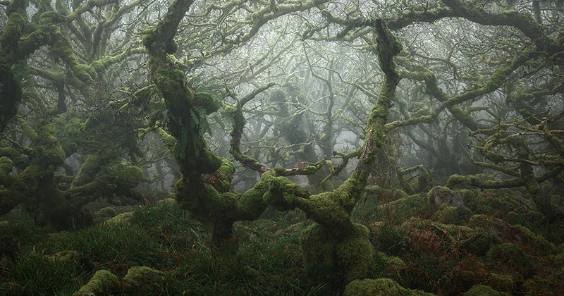 Nobody Captures the Mystical Wistman's Wood Like Neil Burnell