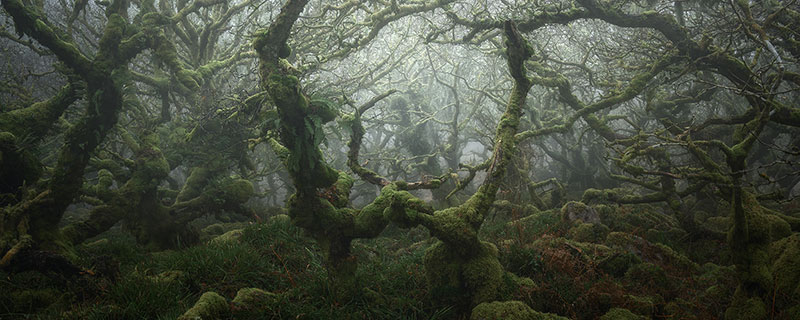 neil burnell wistmans wood photography 2 Nobody Captures the Mystical Wistmans Wood Like Neil Burnell