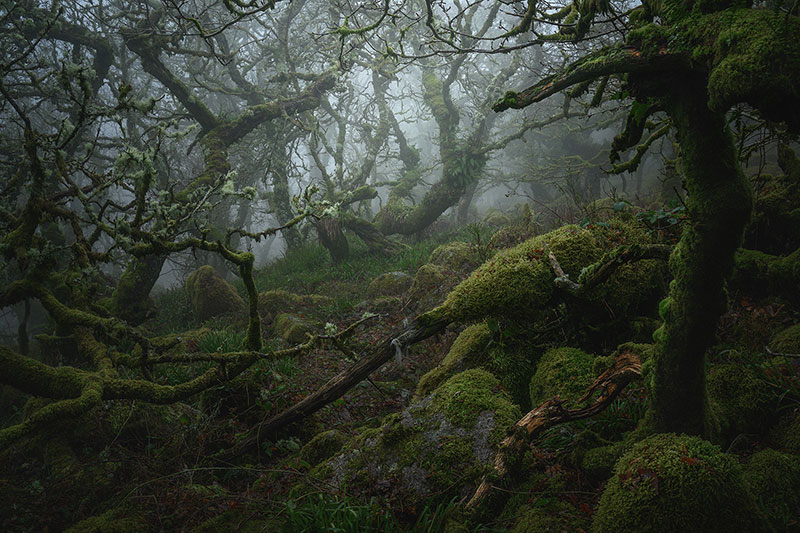 neil burnell wistmans wood photography 8 Nobody Captures the Mystical Wistmans Wood Like Neil Burnell
