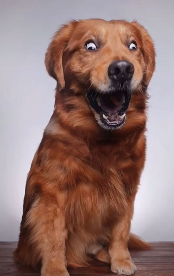 when you throw a dog a treat and capture it with burst mode 2 When You Throw Your Dog a Treat and Capture It with Burst Mode