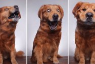 When You Throw Your Dog a Treat and Capture It with Burst Mode
