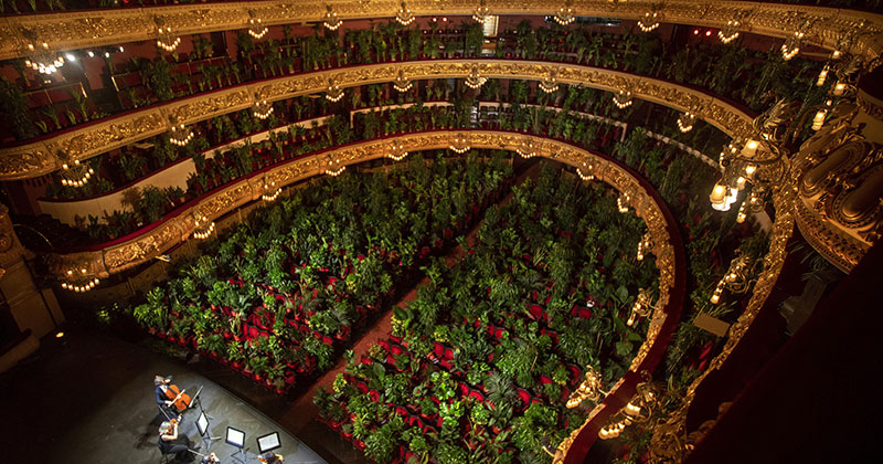 Barcelona Opera Reopens to a Packed Crowd of House Plants