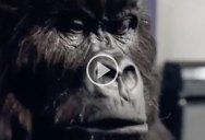 The Cadbury Gorilla Drummer is Still the Best Ad Ever