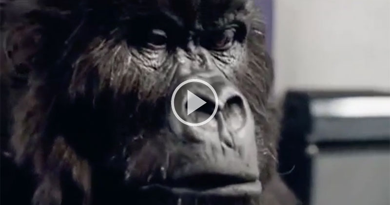 The Cadbury Gorilla Drummer is Still the Best Ad Ever