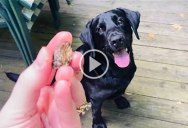 This Dog's Amazing Fetch Was Called Fake by Haters So He Did It Again