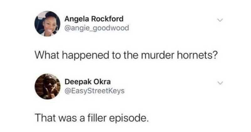 murder hornets filler episode tweet The Shirk Report – Volume 582