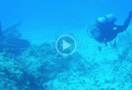 These Scuba Divers Got Pinged by a Submarine Sonar and It Sounds So Bizarre