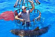 Shark Attack Test – Human Blood vs Fish Blood