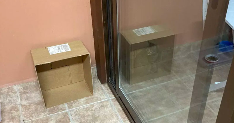 "This Viral ""Schrödinger's Cat"" Photo Took Me Way Too Long to Figure Out"
