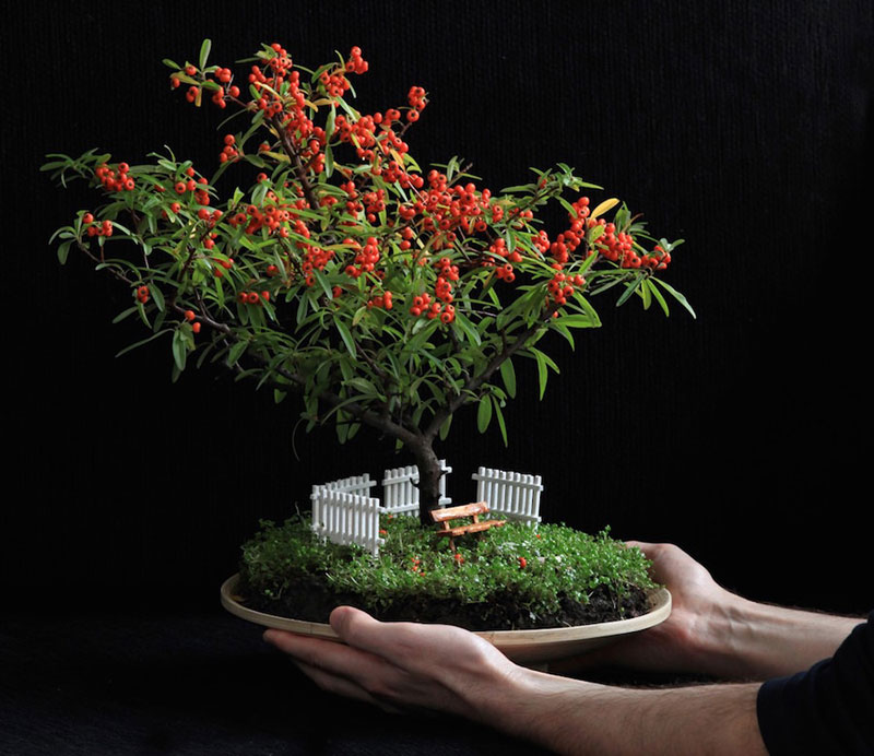 bonsai trees with fruit 1 Bonsai Fruit Trees are a Thing and Theyre Pretty Adorable (11 Photos)
