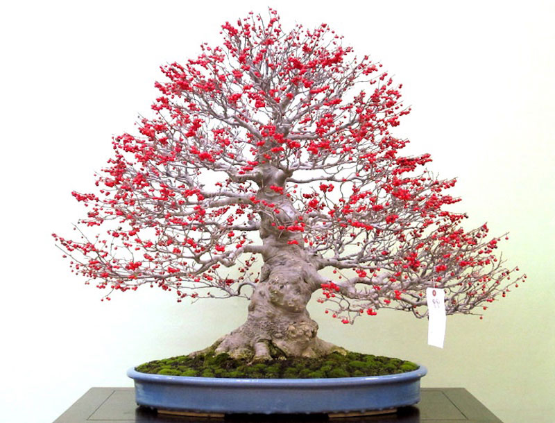 bonsai trees with fruit 13 Bonsai Fruit Trees are a Thing and Theyre Pretty Adorable (11 Photos)