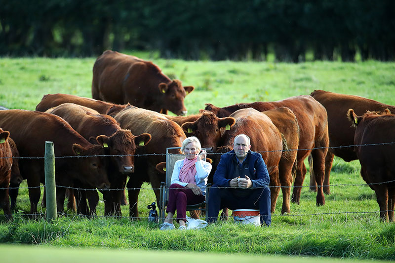 farmer cows irish open golf 2 The Only Spectators at the Irish Open were These Neighboring Farmers and Cows