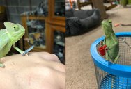 Just a Lizard Holding a New Lego Prop Each Day
