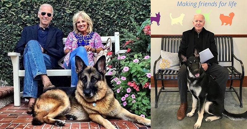biden dogs champ and major german shepherds4 The First Dogs: Champ and Major