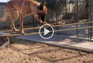 Amazing Dog Absolutely Crushes Obstacle Course