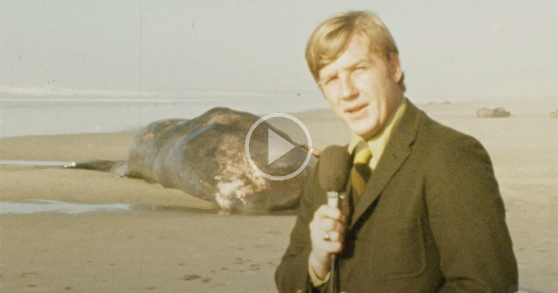 Infamous Exploding Whale News Clip Gets Remastered in 4K for Its 50th Anniversary