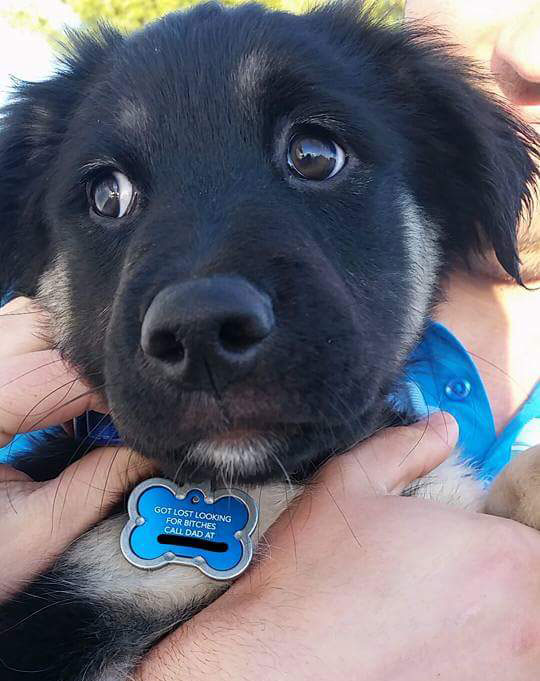 funny dog id tags collars 12 Dog Tags are Always Useful and Sometimes Hilarious (13 Pics)
