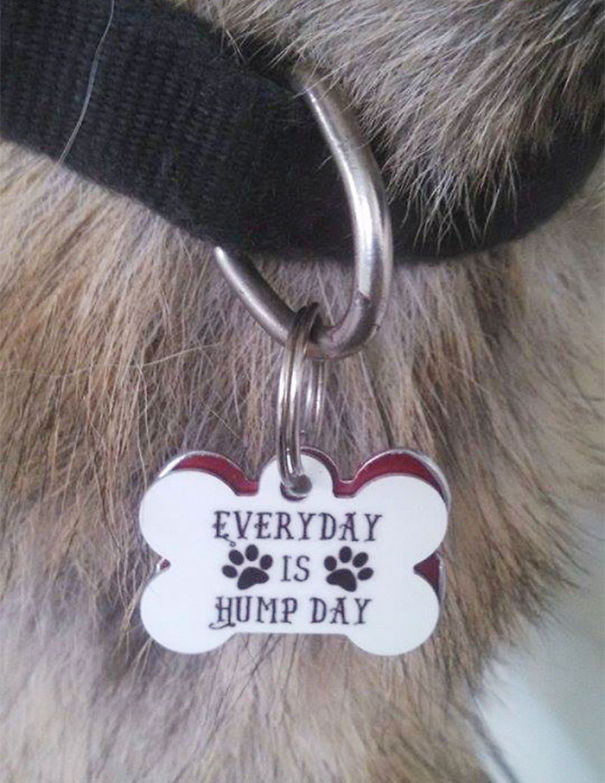 funny dog id tags collars 6 Dog Tags are Always Useful and Sometimes Hilarious (13 Pics)