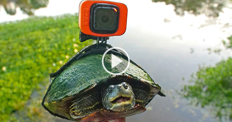 Pond Life from a Turtle's POV