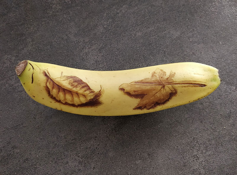 bruised banana art by anna chojnicka 14 Amazing Banana Art Made by Poking and Bruising the Skin, No Ink is Used