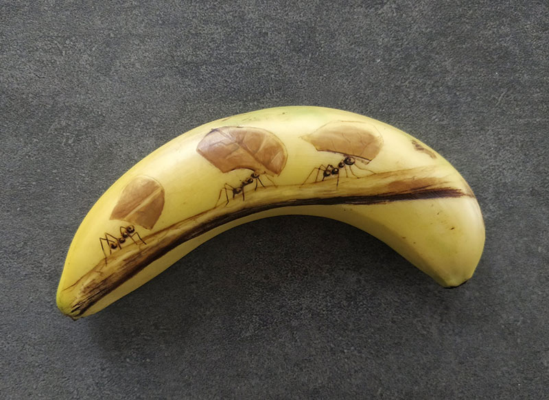 bruised banana art by anna chojnicka 17 Amazing Banana Art Made by Poking and Bruising the Skin, No Ink is Used