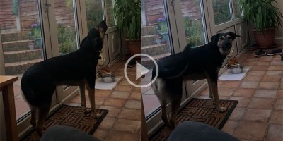 Ever Heard a Dog with Vibrato?
