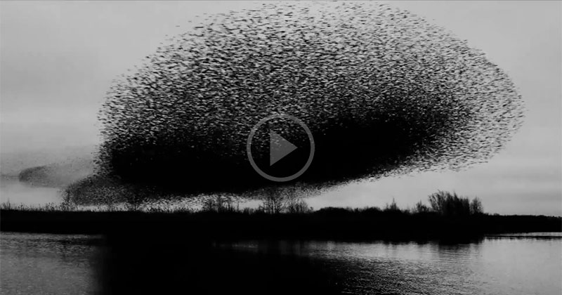 If you've never seen a million birds fly in unison, check this (and turn the sound up!)