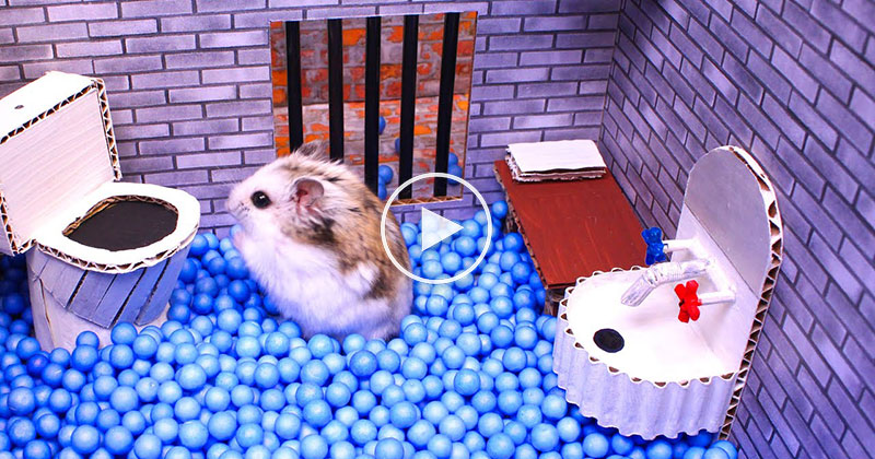 Everything About This Hamster Maze Escape is Amazing