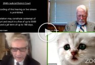 Lawyer Joins Virtual Court Hearing in Texas with Cat Filter On and Can't Disable It