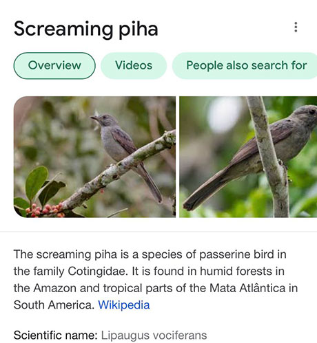funny bird species names 10 Species of Birds Named By People Who Clearly Hate Birds is a Thing and Its Incredible
