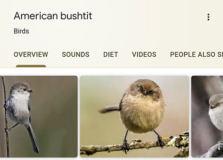 funny bird species names 11 Species of Birds Named By People Who Clearly Hate Birds is a Thing and Its Incredible