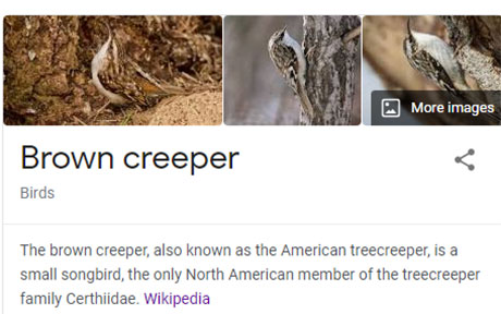 funny bird species names 15 Species of Birds Named By People Who Clearly Hate Birds is a Thing and Its Incredible