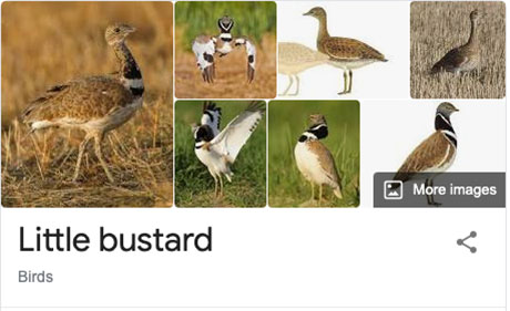funny bird species names 17 Species of Birds Named By People Who Clearly Hate Birds is a Thing and Its Incredible