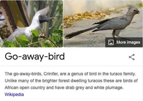 funny bird species names 18 Species of Birds Named By People Who Clearly Hate Birds is a Thing and Its Incredible