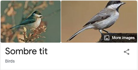 funny bird species names 23 Species of Birds Named By People Who Clearly Hate Birds is a Thing and Its Incredible
