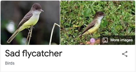 funny bird species names 24 Species of Birds Named By People Who Clearly Hate Birds is a Thing and Its Incredible