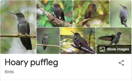 funny bird species names 25 Species of Birds Named By People Who Clearly Hate Birds is a Thing and Its Incredible