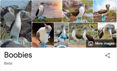 funny bird species names 29 Species of Birds Named By People Who Clearly Hate Birds is a Thing and Its Incredible